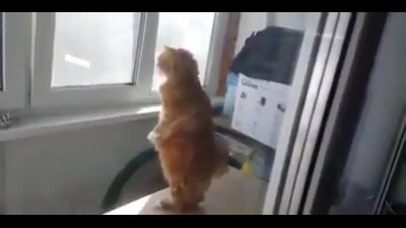 Кот шпион