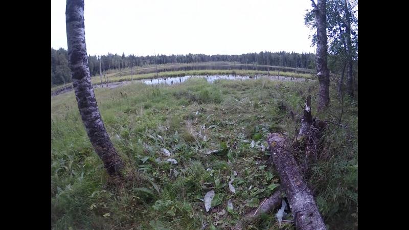 Оз. Веранда ,место где отдыхал медведь. замятая трава и помет...