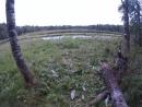 Оз Веранда место где отдыхал медведь замятая трава и помет