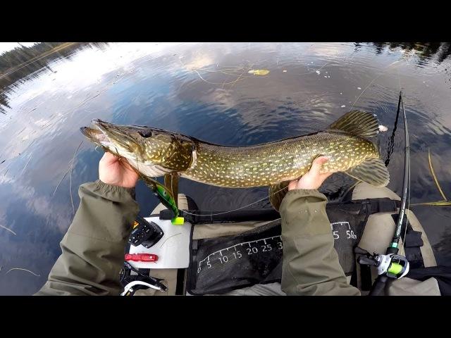 Hauen kalastusta joen suvantoalueella | Pike fishing from float tube