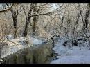 Зимний лес перенос