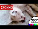 Видео самарских малолетних живодерок заинтересовало СК