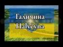 ГАЛИЧИНА   HALYČYNA   Ukrainian song   Леся Горлицька