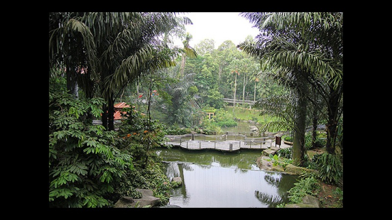 Малайзия Кала Лумпур Самый Большой Парк Птиц в Мире