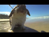 Rabbit at the beach