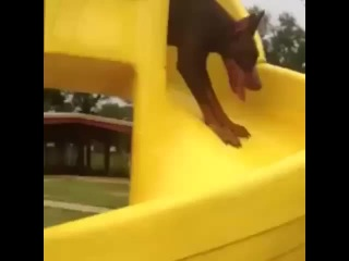This dog doesn't understand how slides work 😂 GreatestReactions