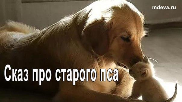 Сказ про старого пса