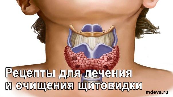 Рецепты для лечения и очищения щитовидки