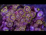 Подводный мир в ультрафиолете.