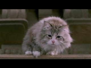 Film nine lives english  sub  mi papa es un gato  for more films send friendship
