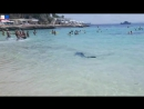Blue shark captured following Mallorca beach panic