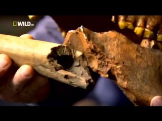 Доисторические хищники — Короткомордый медведь Документальные фильмы Nat Geo