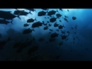 Wonderful Chill Out Music- OXYGENE - The Ocean [1080p HD AV 10 min Remix]