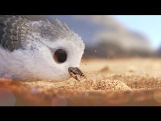 Piper • 2016 • Pixar • 1080p