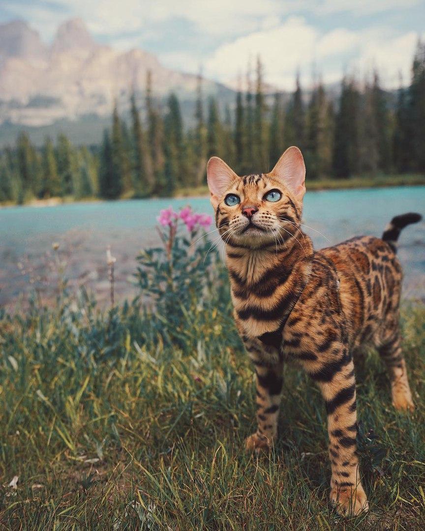 qASEXcrU 4g - Когда у кота сбываются твои мечты
