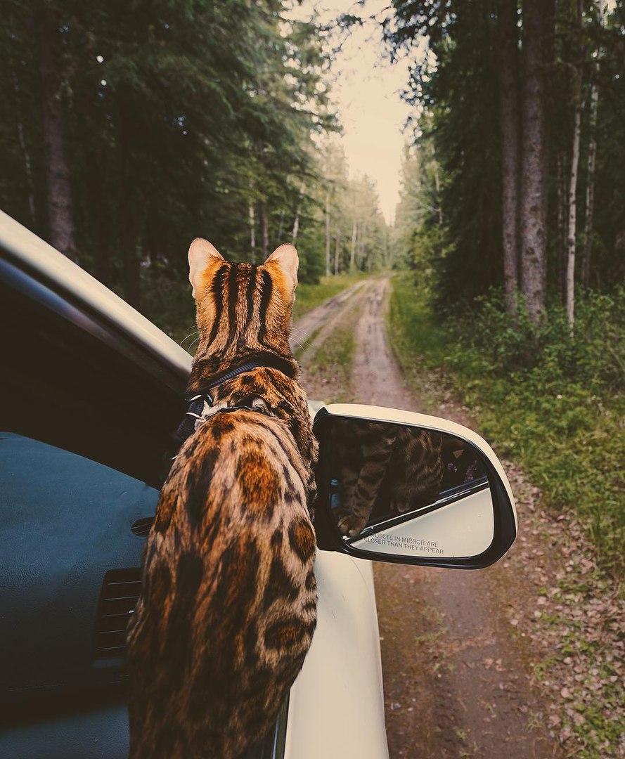 g5Hv3XguxJM - Когда у кота сбываются твои мечты