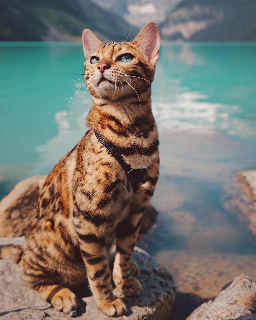 XAMLRgcNj9I - Когда у кота сбываются твои мечты