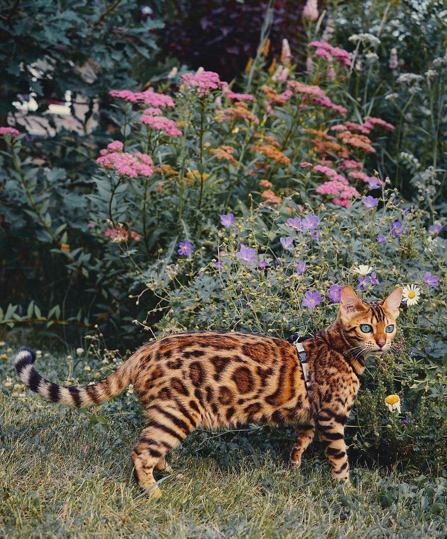 SGZ1uOZcsVg - Когда у кота сбываются твои мечты