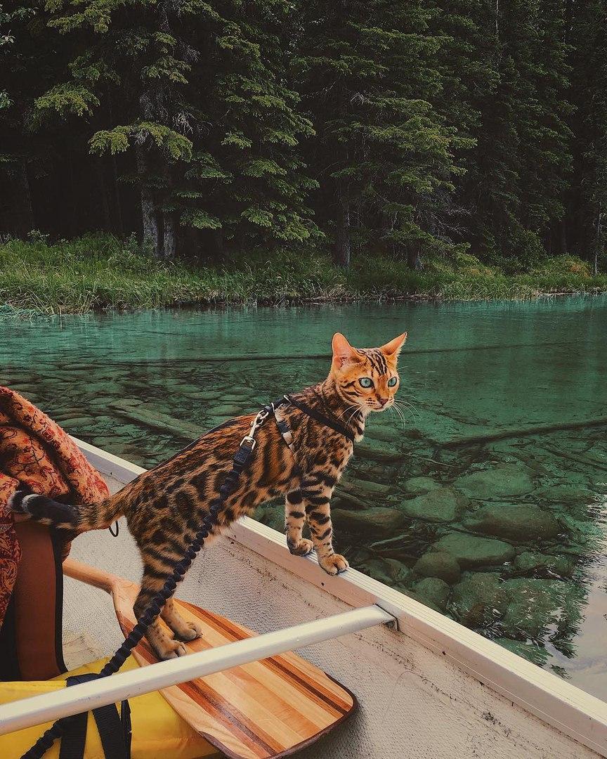 YpiYaXbpUdE - Когда у кота сбываются твои мечты