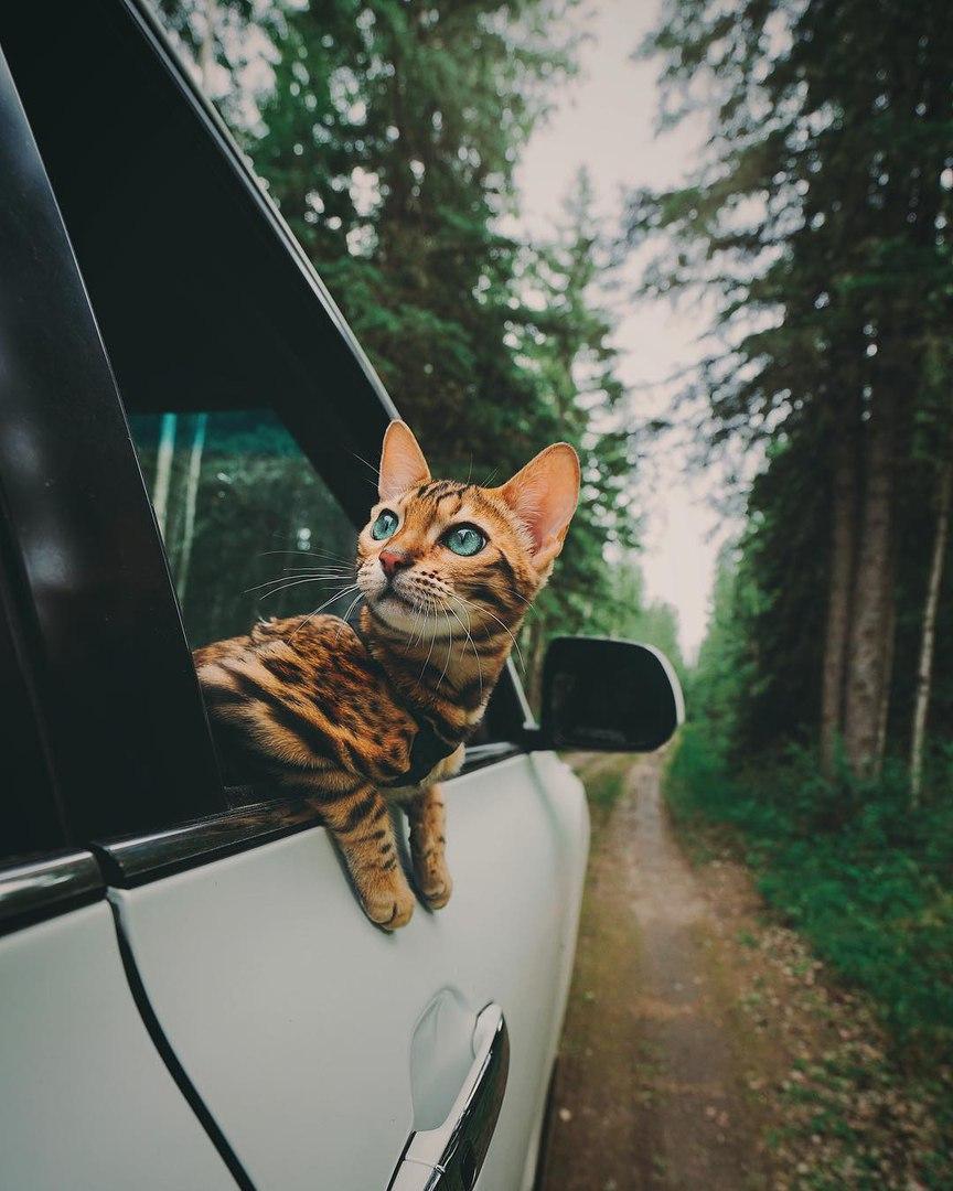 5b52P4tvULQ - Когда у кота сбываются твои мечты