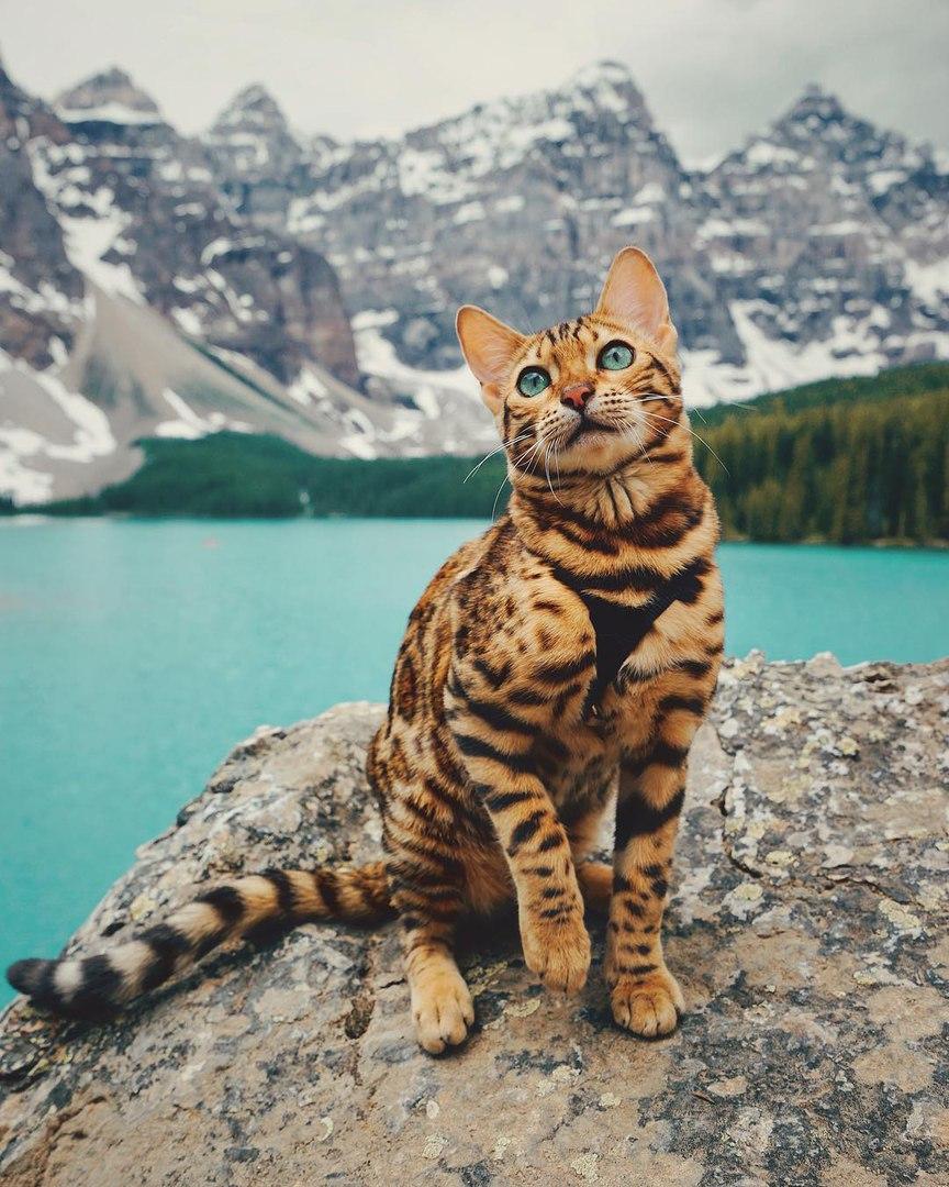 zyfGkSlt K0 - Когда у кота сбываются твои мечты