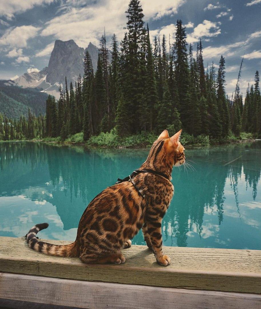 qruEgZqFFlI - Когда у кота сбываются твои мечты