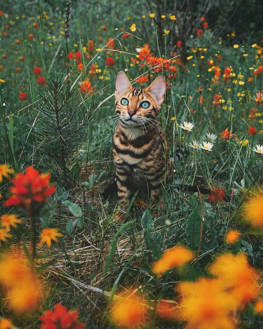 UBa2FzHHC 4 - Когда у кота сбываются твои мечты