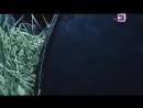 СЕКСУАЛЬНЫЕ АМАЗОНКИ ШОКИРОВАЛИ ПЛАНЕТУ! АМАЗОНКИ ДОКУМЕНТАЛЬНЫЙ ФИЛЬМ 09.11.2016