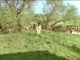 Клетка для кроликов (2002) 360
