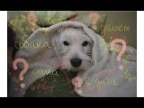 СОБАКА ОДНА ДОМА /Diana Heavenly/ Тайная жизнь домашних животных