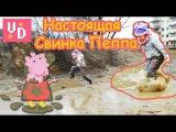 Настоящая свинка Пеппа прыгает по лужам!