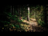 Wintersun - The Forest That Weeps (Summer) Official Lyric Video