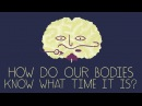 How does your body know what time it is - Marco A. Sotomayor