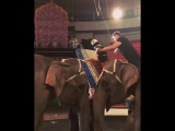 Шпагат на слонах;)