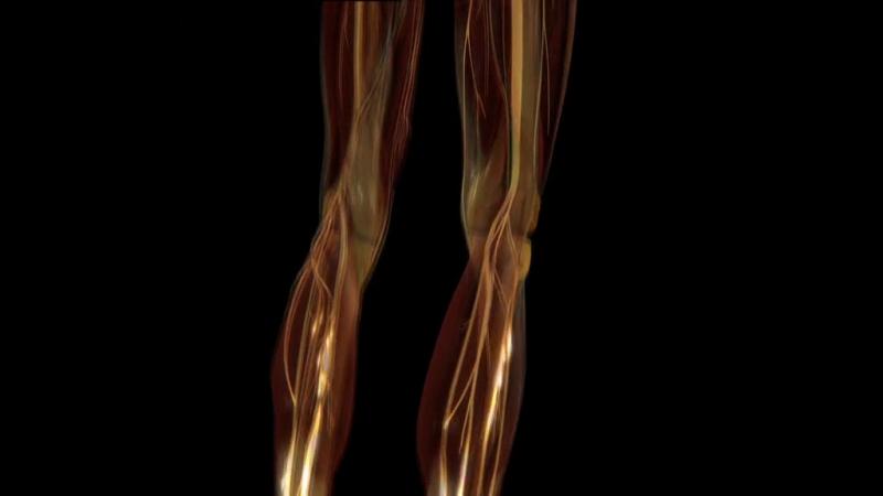 Discovery. Тело человека. Грани возможного 2 серия. Сила мышц