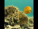 Подводный мир красного моря😃