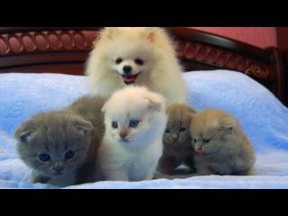 Нам подкинули котят! Реакция Малыша на маленьких котиков! Самое няшное видео!