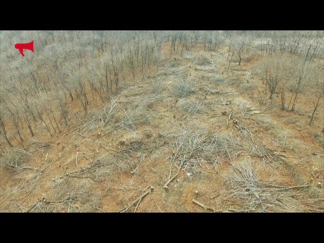 Вырубка леса Китайцы крысолюди