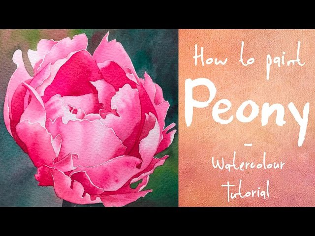 How to paint a Pink Peony - Watercolour tutorial
