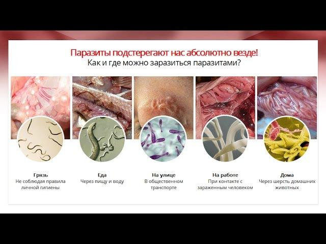 Detoxic - Быстро Очистит Организм от Паразитов и Гельминтов за 1 курс!