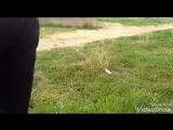 жизнь на тротуаре #1 гомункул и укроп
