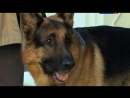 Т/С Лорд Пёс - полицейский 24 серия 2013г