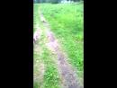 Ева на прогулке!