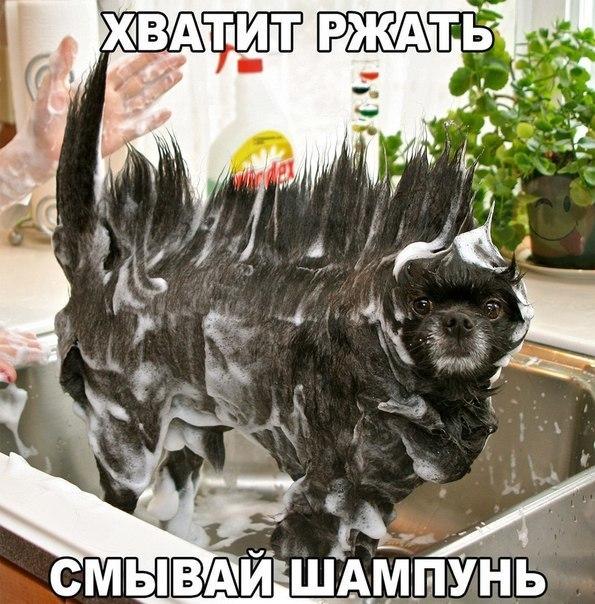 https://pp.vk.me/c837628/v837628508/b60/dlU4p931Hss.jpg