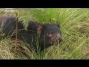 Дикая жизнь с Тимом Фолкнером The Wild Life of Tim Faulkner 2013 05