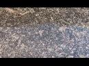 Яйца артемий (Artemia salina)