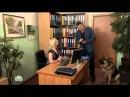 Возвращение Мухтара 9 сезон 88 серия Испорченный обед