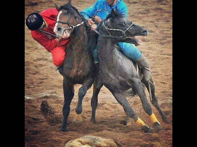 Кок бору Кыргызская легендарная лошадь по кличке БТР Kok boru Kyrgyzstan