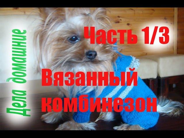 Как связать комбинезон для собаки своими руками Часть 1