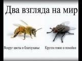 Сознание Мухи и Сознание Пчелы. Два Мировоззрения